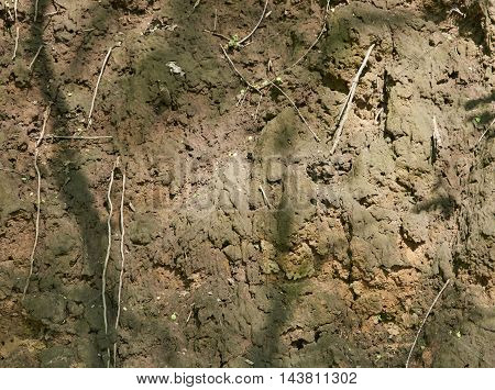 The of the ravine of clay. Exposing the roots of the plants. Natural sunlight. Texture background