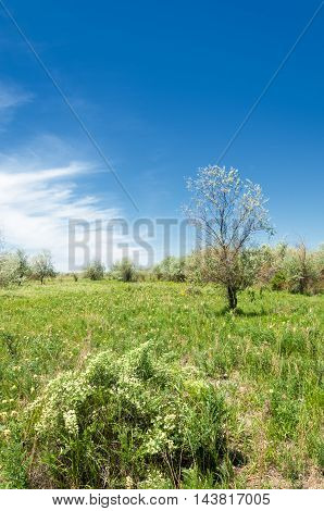 steppe prairie veld veldt. a large area of flat unforested grassland in southeastern Europe or Siberia.