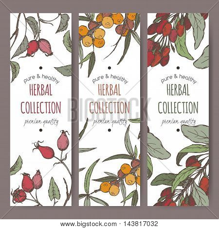 Set of tree color vector herbal tea labels with common sea buckthorn, goji berry and dog rose fruit hand drawn sketch. Placed on white background.