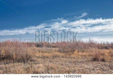 Steppe in the late autumn. Steppe, in the floodplain of the river, in the winter season. Treeless, poor moisture and generally flat area with grassy vegetation in the Dry Zone.