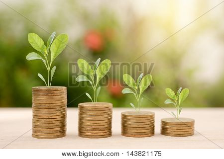 Growing tree on stack gold coin with business investment saving finance and banking concept.