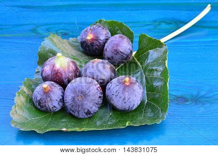 Seven blue figs on big mulberry leaf over turquise blue wooden background
