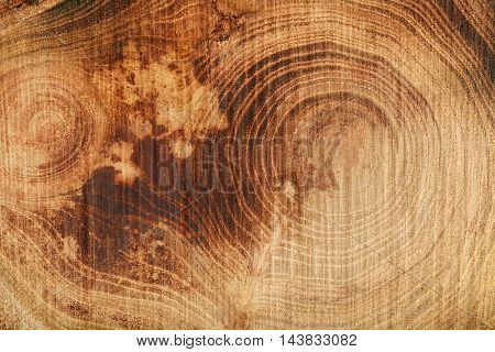 Tree trunk cross section, closeup