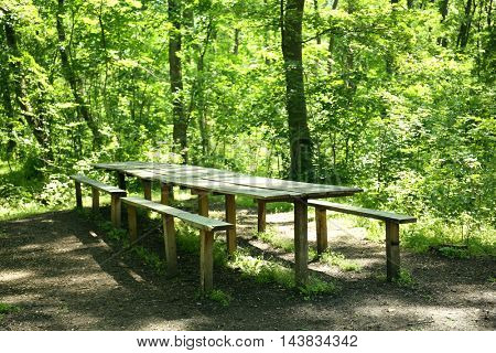 Wooden bench and table in summer forest