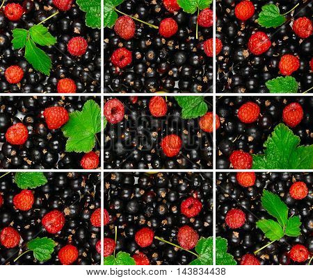 bright background of the berries of black currant raspberry and green leaf