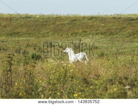 white horse  is on the green field