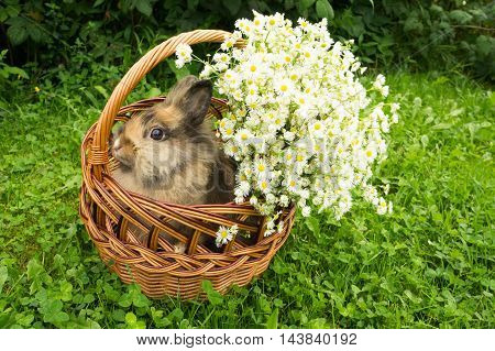 cute rabbit sitting in a basket with daisies