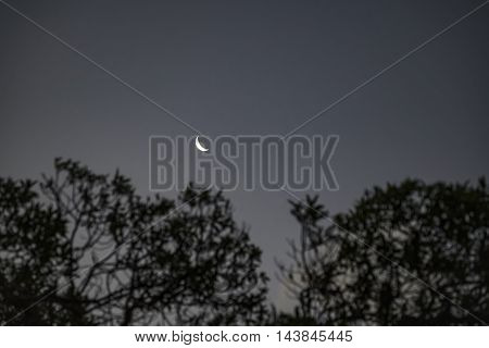 Dark moonscape scene with silhouette trees and moon in clean blue sky background