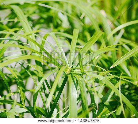 closeup green grass in the summer park