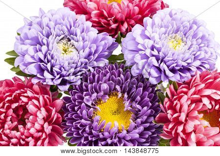 Bouquet of colorful aster flowers close up