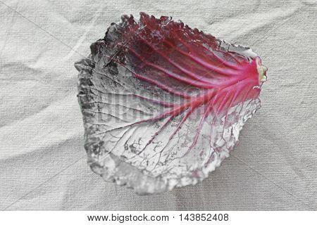 Red cabbage leaf on light background