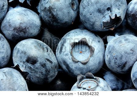 Blueberries. Blue berry close up as a background