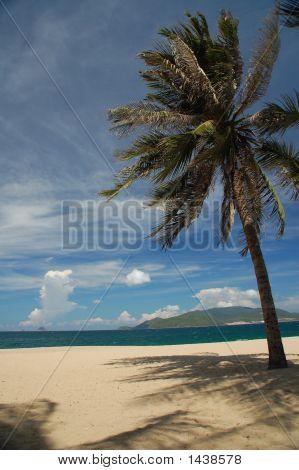 Palm On Beach