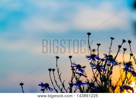 flower silhouette sunset
