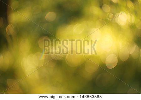 The Beautiful nature bokeh background, close up