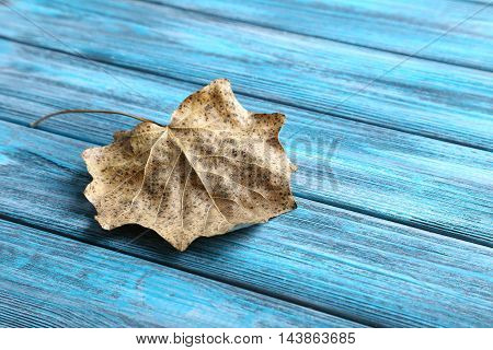 Dry leaf on a wooden table, close up