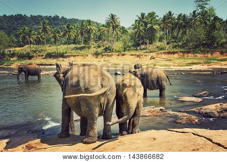 Elephants Family Asia Elephant