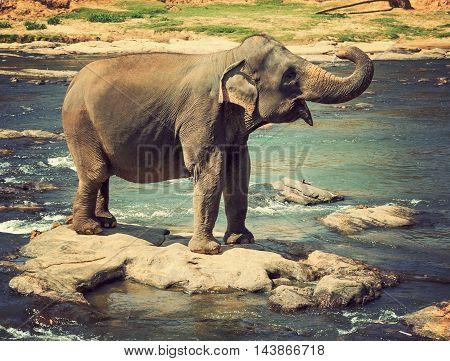 Elephant Asia Jungle
