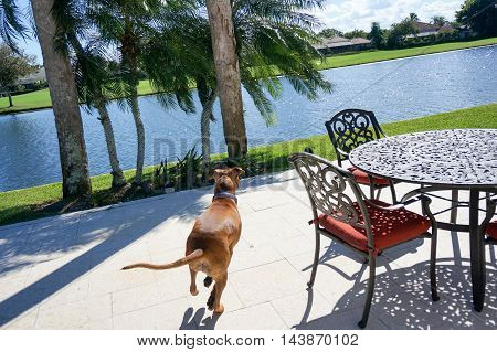 brown dog runs away from camera in a tropical setting