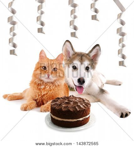 Cute dog and cat with delicious chocolate cake and satin ribbons isolated on white
