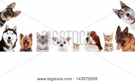 Row of different pets on white background.
