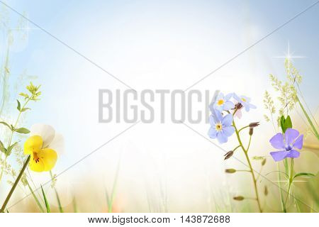 Beautiful wildflowers design with space for text. Bright blurred background.