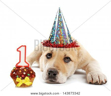 Central Asian Shepherd puppy with party hat and birthday cupcake isolated on white