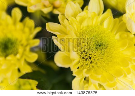 Yellow Flower Macro Dense Center Bright Petals