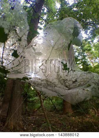 bugs in a spider web in the forest