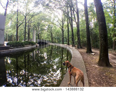 brown dog in a park underneath a tree canopy