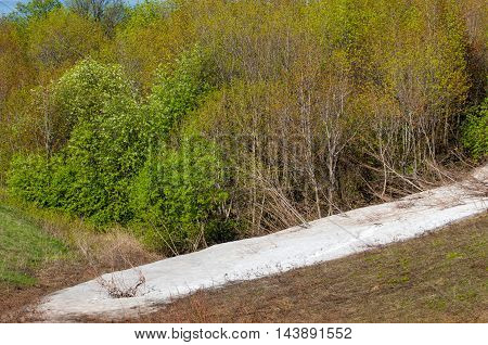 Last Snow, Green Trees
