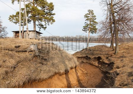 Pine Forest In Spring. River Ice.  The Season Of Spring. Spring, Springtime, Springtide, Prime