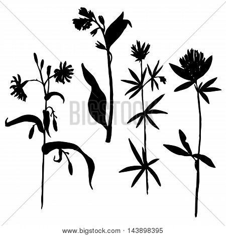 Vector set of wild flowers and herbs silhouettes, isolated wild plants, black monochrome floral elements