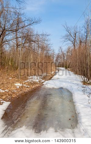 Country Road In The Forest In The Early Spring