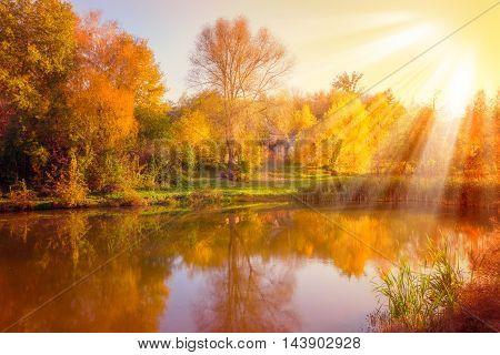 Beautiful Autumn Scene