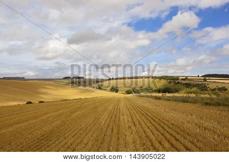 Harvested Golden Fields
