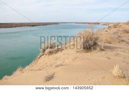 Sand. Spring. Water. Snow. Haloxylon