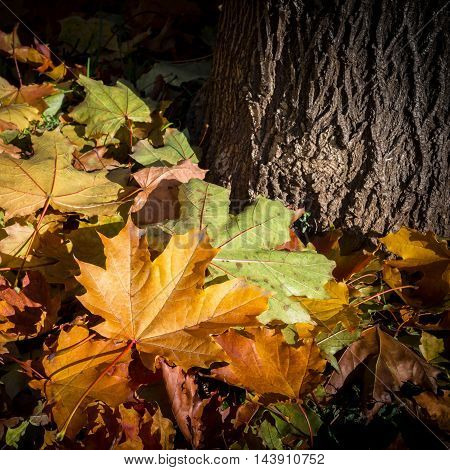 Close-up view of the base of a tree with autumn leaves.
