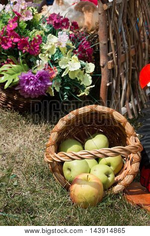 fresh apples fell from the basket on the grass