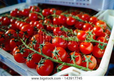 Fresh ripe red tomatoes in boxes in whole sale market ready for retail