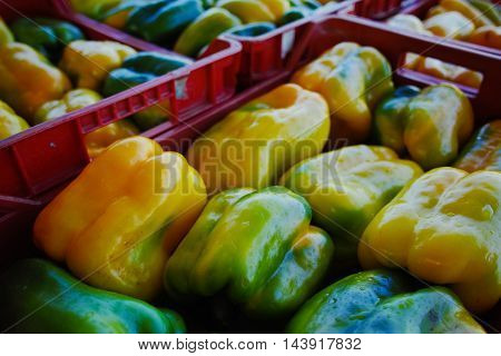 Fresh yellow paprika peppers in boxes in whole sale market ready for retail
