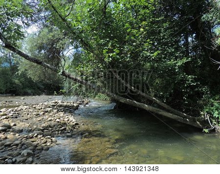 Wild mountain stream with shallow water pebbles and collapsing trees