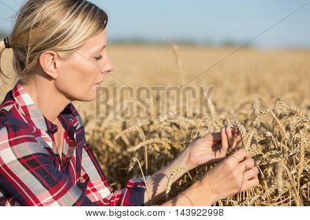 portrait of Female Farmer examining wheat crop