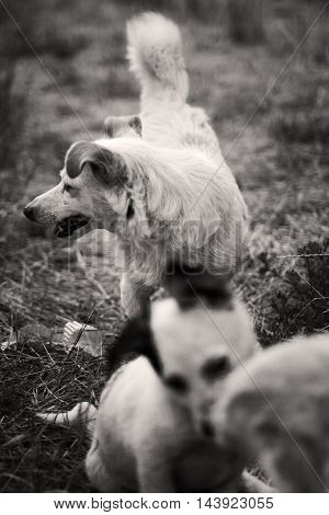 dogs Mom with kids puppies black-white miserably white street dog dog with puppies