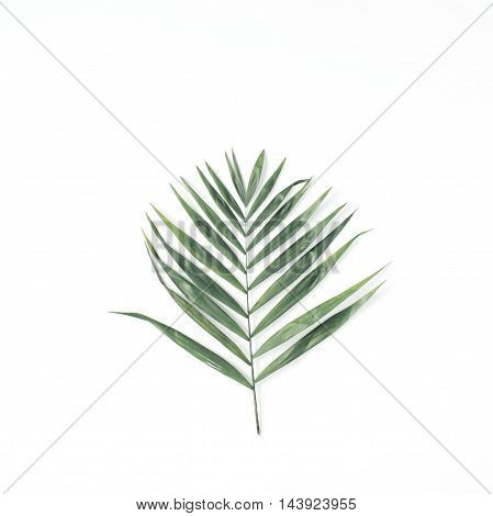 lone palm branch isolated on white background. flat lay top view