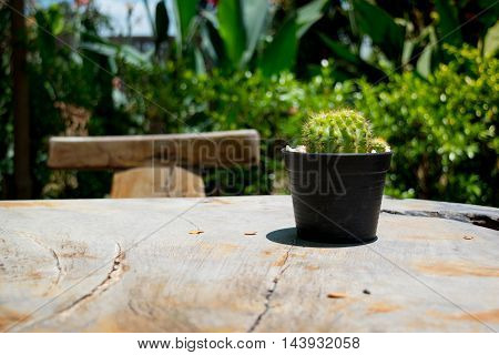 Cactus on a Wooden Table in the Sunny Morning Day
