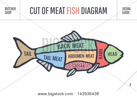 Cut of meat set. Poster Butcher diagram and scheme - Fish. Colorful vintage typographic hand-drawn visual guide for butcher shop. Vector illustration