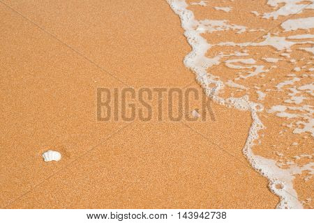 Beach with sea shells, sand and spray water as background