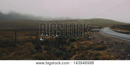 Foggy field in Cradle Mountain, Tasmania, Australia.