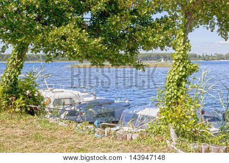 Two Trees Covered Of Ivy In Front Of Motorboats In A Lake